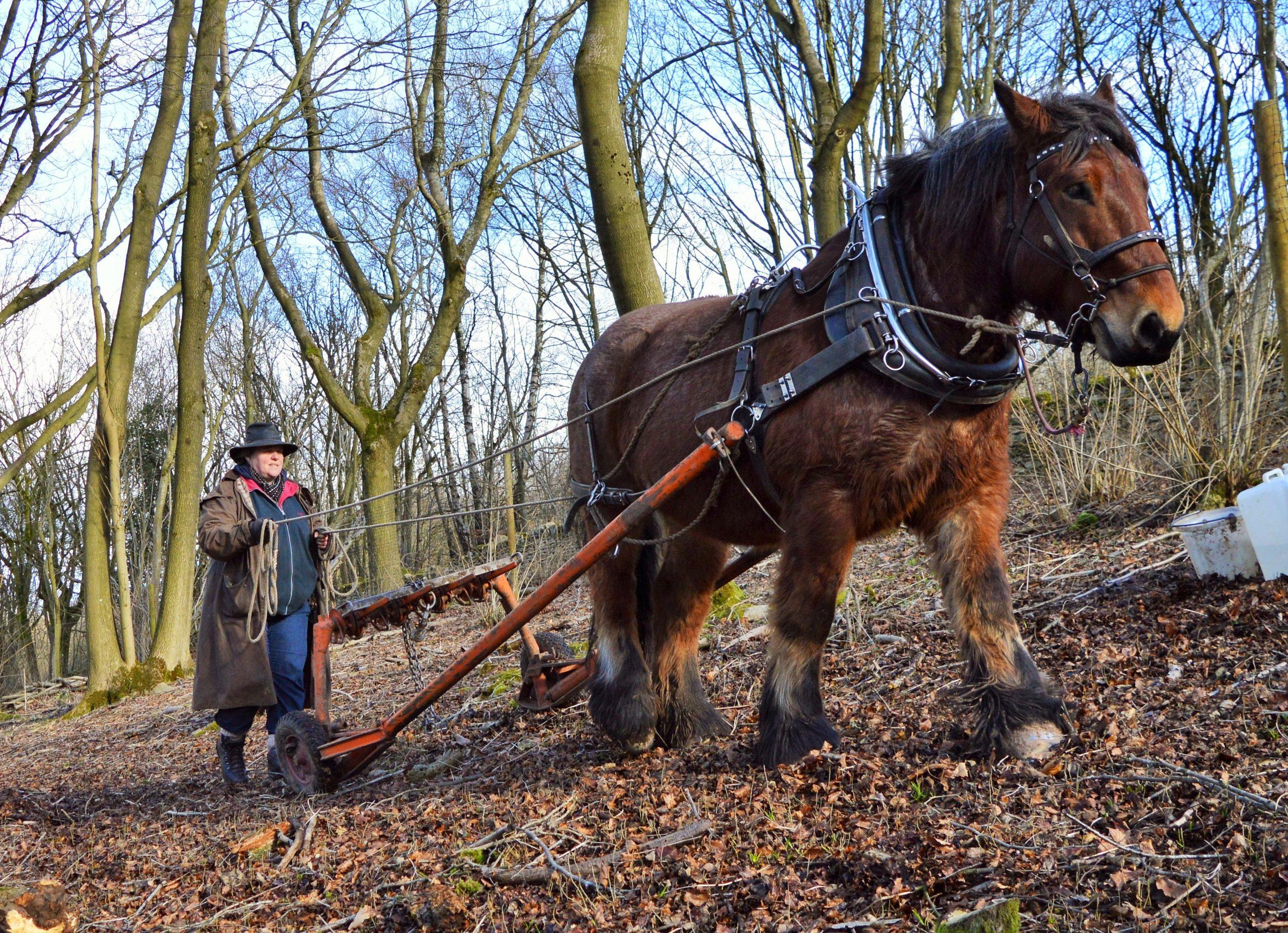 A woman horselogging